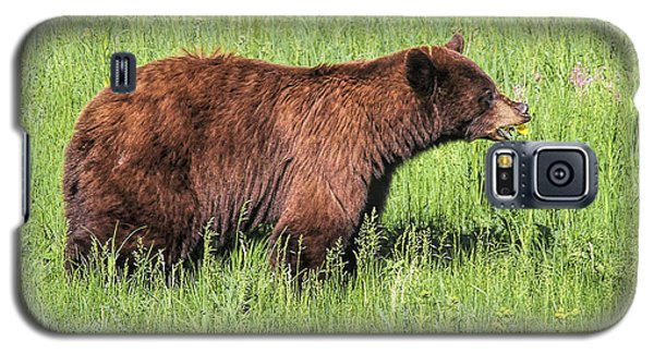 Bear Eating Daisies Galaxy S5 Case