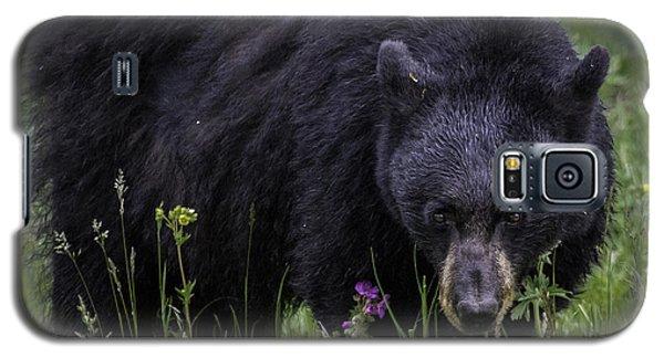 Bear Gaze Galaxy S5 Case by Elizabeth Eldridge