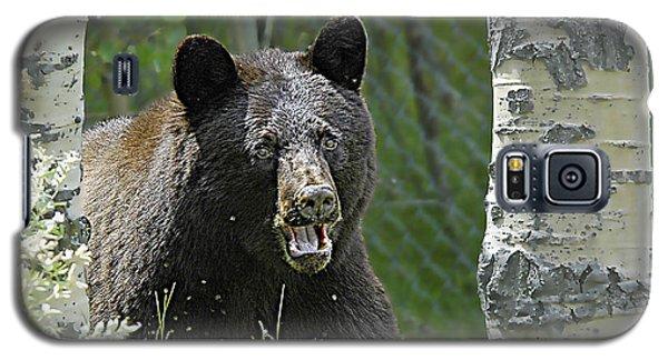Bear In Yard Galaxy S5 Case