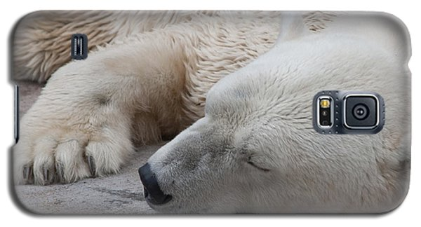 Bear Nap Galaxy S5 Case by Cindy Haggerty