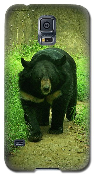 Bear On The Prowl Galaxy S5 Case