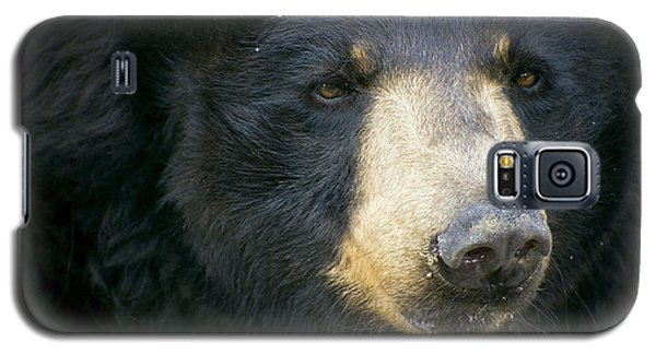 Galaxy S5 Case featuring the photograph Bear With Me by Cheri McEachin