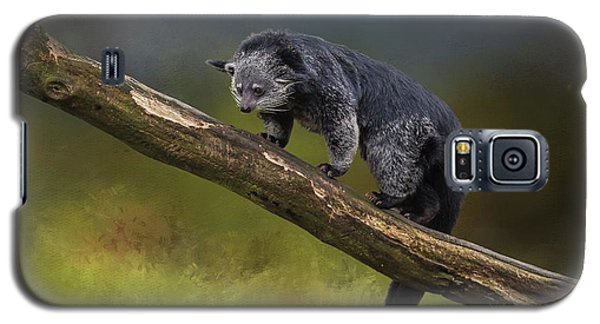 Bearcat Galaxy S5 Case