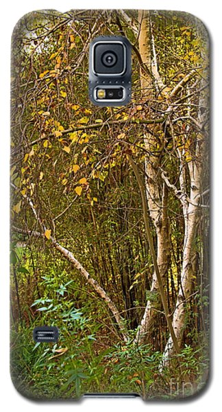 Galaxy S5 Case featuring the photograph Bearch by Viktor Savchenko