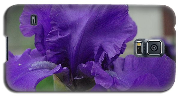 Bearded Blue Iris Galaxy S5 Case by Robyn Stacey
