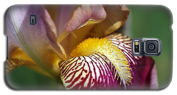 Bearded Iris Flower Mary Todd Galaxy S5 Case