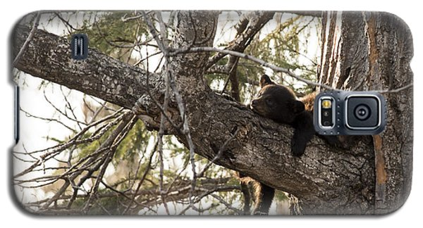 Bearly Hanging In There Galaxy S5 Case