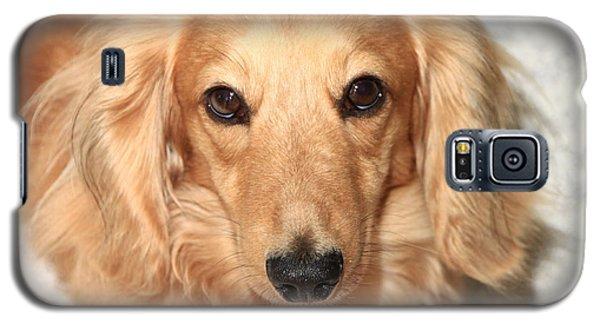 Beau Galaxy S5 Case