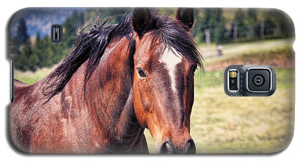 Beautiful Bay Horse In Pasture Galaxy S5 Case by Tracie Kaska