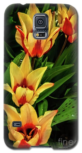 Galaxy S5 Case featuring the photograph Beautiful Bicolor Tulips by Robert Bales