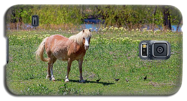 Beautiful Blond Horse And Four Little Birdies Galaxy S5 Case by James BO Insogna