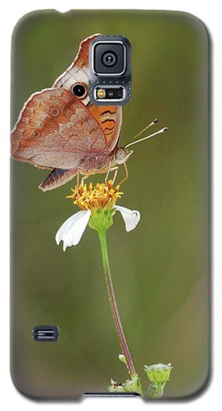 Beautiful Buckeye Galaxy S5 Case