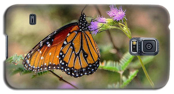 Galaxy S5 Case featuring the photograph Beautiful Butterfly by Elaine Malott