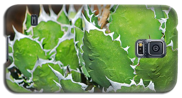 Galaxy S5 Case featuring the photograph Beautiful Cactus by Donna Greene