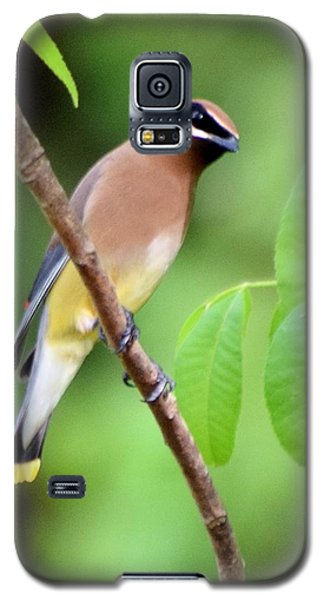 Beautiful Cedar Wax Wing  Galaxy S5 Case