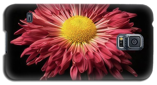 Beautiful Chrysanthemum Galaxy S5 Case