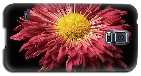 Beautiful Chrysanthemum Galaxy S5 Case