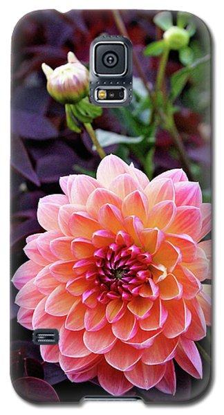 Beautiful Dahlia Galaxy S5 Case