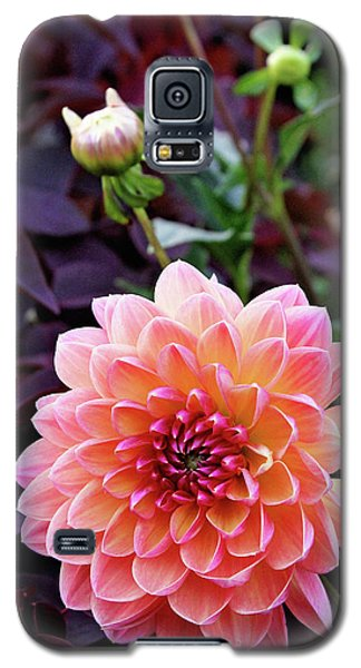Beautiful Dahlia Galaxy S5 Case