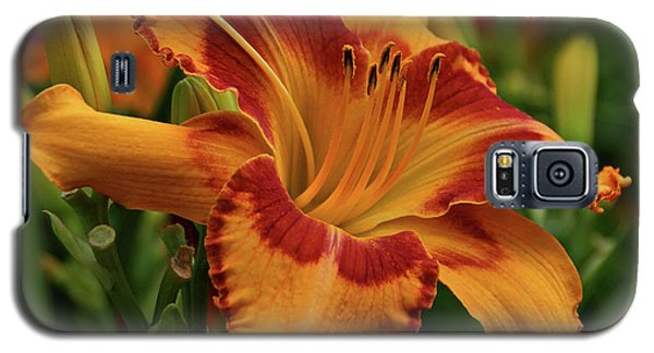 Galaxy S5 Case featuring the photograph Beautiful Daylily by Sandy Keeton
