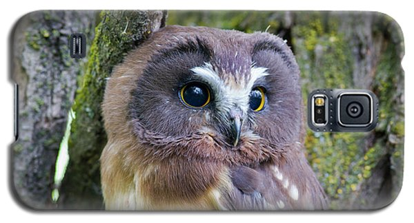 Beautiful Eyes Of A Saw-whet Owl Chick Galaxy S5 Case