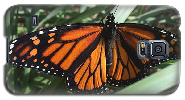 Galaxy S5 Case featuring the photograph Beautiful Fall Butterfly  by Paula Brown