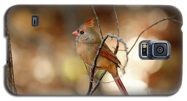 Galaxy S5 Case featuring the photograph Beautiful Female Cardinal by Darren Fisher