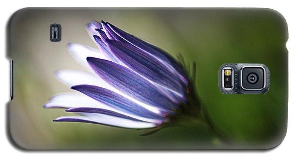 Beautiful Inner Glow Of The Daisy Galaxy S5 Case