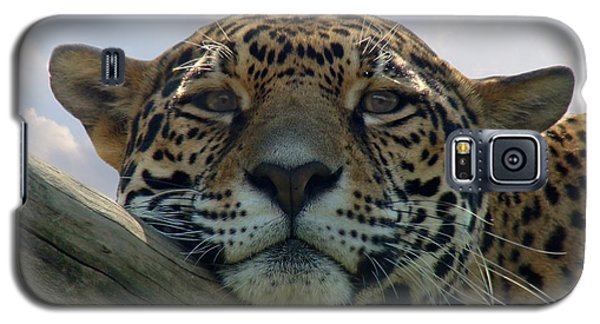 Beautiful Jaguar Galaxy S5 Case