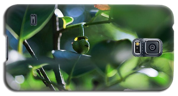 Beautiful Nature Galaxy S5 Case