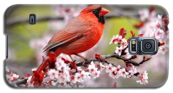Beautiful Northern Cardinal Galaxy S5 Case