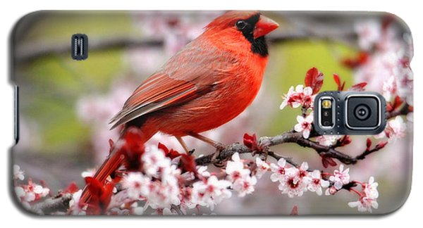 Beautiful Northern Cardinal Galaxy S5 Case