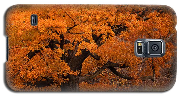 Beautiful Orange Tree On A Fall Day Galaxy S5 Case