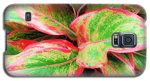 Galaxy S5 Case featuring the photograph Beautiful Red Aglaonema by Ray Shrewsberry
