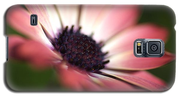 Beautiful Rich African Daisy Zion Red Flower Galaxy S5 Case
