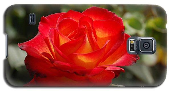 Beautiful Rose Galaxy S5 Case