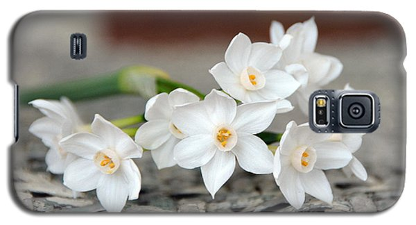 Beautiful Spring Paperwhites Galaxy S5 Case