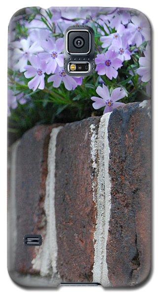Beauty And Bricks Galaxy S5 Case by Linda Mesibov