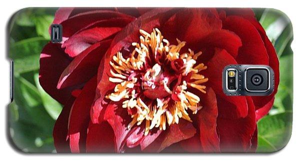 Beauty Peony Bloom Galaxy S5 Case by Marsha Heiken