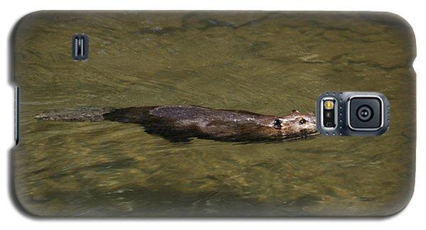 Beaver Swim Galaxy S5 Case