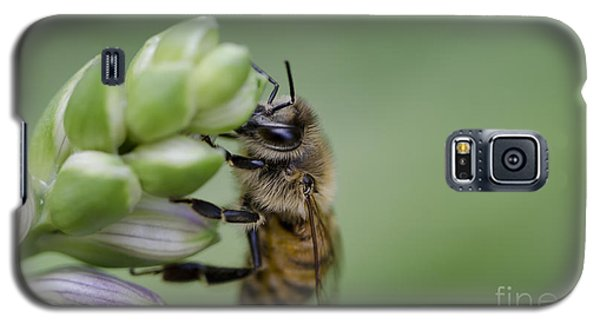 Galaxy S5 Case featuring the photograph Busy Bee by Andrea Silies