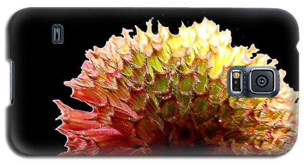 Galaxy S5 Case featuring the photograph Bee Balm by Diane Merkle