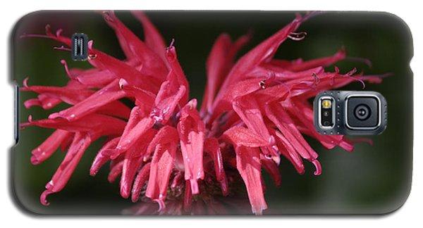 Bee Balm Galaxy S5 Case