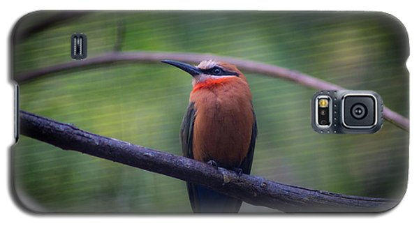 Bee-eater Galaxy S5 Case