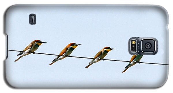 Bee Eaters On A Witre  Galaxy S5 Case