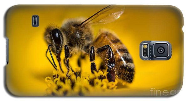 Bee Enjoys Collecting Pollen From Yellow Coreopsis Galaxy S5 Case