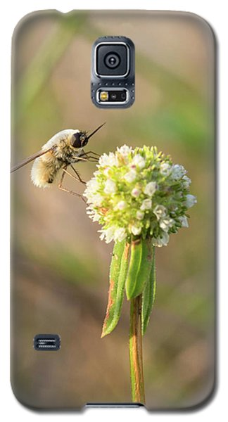 Bee Fly On A Wildflower Galaxy S5 Case