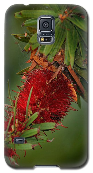 Bee In Red Flower Galaxy S5 Case by Joseph G Holland