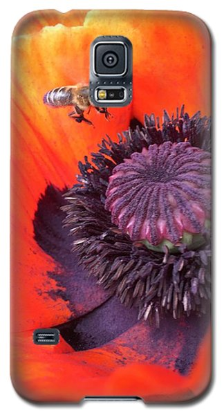Galaxy S5 Case - Bee Is Visiting A Poppy by Orphelia Aristal
