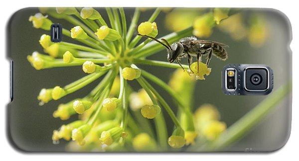 Bee Galaxy S5 Case by Jivko Nakev